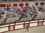 A leopard wanders in around the edge of the amphitheatre at Puy du Fou
