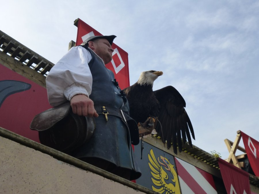 The bird handlers are incredible as are the trained birds at Puy du Fou