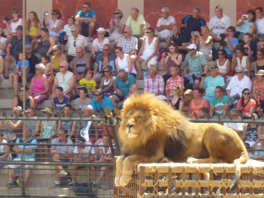 Whilst this giant lion looks on from the top of the cage at Puy du Fou